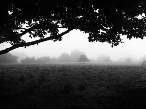 morning-fog-emerging-from-trees-112_l