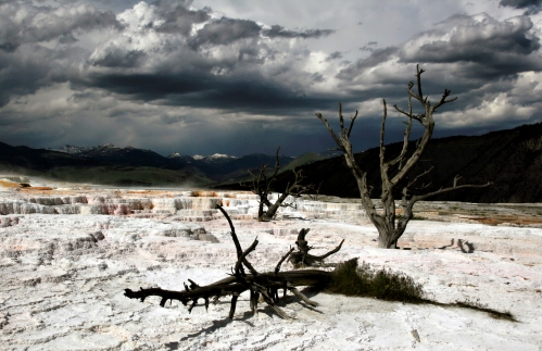 Dead_trees_at_Mammoth_Hot_Springs_1