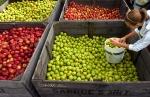 43rd Anniversary of The National Apple Harvest Festival
