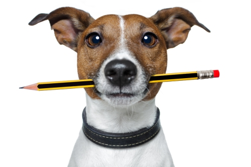 dog with pencil and eraser