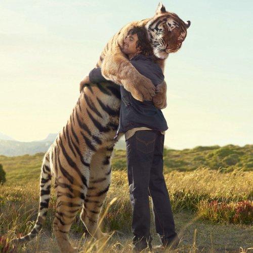 the-warm-hug-with-the-huge-tiger-ipad-wallpaper-ilikewallpaper_com
