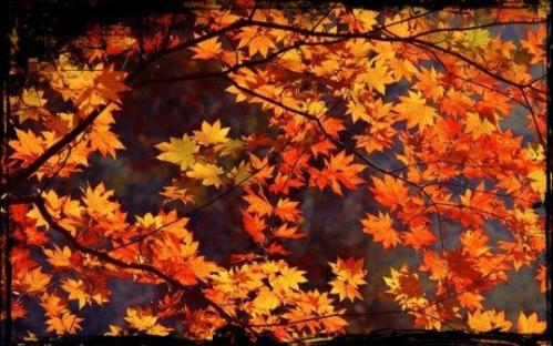 8814886-japan-autumn-leaves-640x400-2