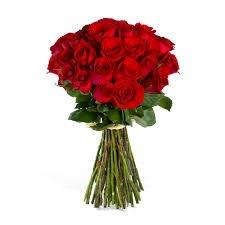 red roses images (2)