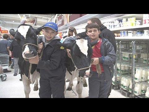 boys with cows dairy protest