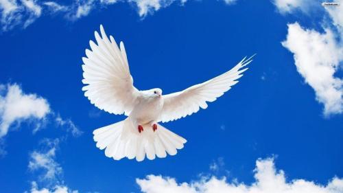 peace_wallpaper_3ebdf_0