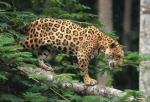 jaguar huntingdownload (4)