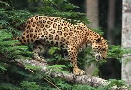 jaguar huntingdownload (4)