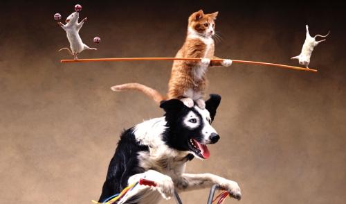 balancing-act1
