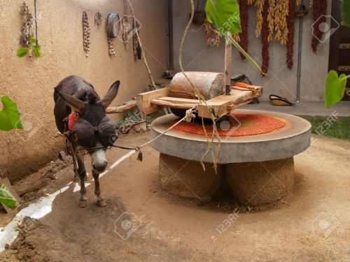 6522125-draught-or-draft-donkey-in-harness-powering-millstone-grinding-dried-red-peppers-in-a-rural-patio-in-stock-photo